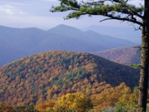 autumn-forest-landscape-near-loft-mountain-shenandoah-national-park-virginia