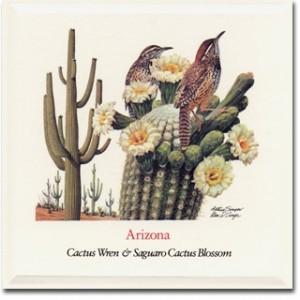 Arizona_Cactus_Wren_Saguaro_Cactus_Blossum_American