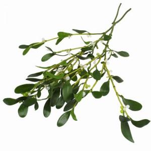 Oklahoma Mistletoe